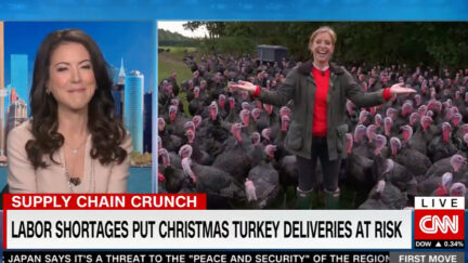 CNN Reporter Surrounded by Turkeys
